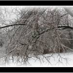 """winter tree in ice stom"" by sherryswest"