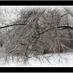 """""""winter tree in ice stom"""" by sherryswest"""