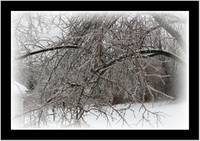 winter tree in ice stom
