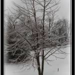 """Icey tree in storm"" by sherryswest"