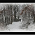 """""""winter lane"""" by sherryswest"""