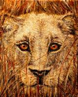 faces of africa-- The Lioness