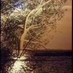 """""""Pinetree on sea side#2"""" by elbardamu"""