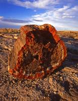Petrified Rock #1