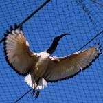 """""""Le ali della non Libert!!!!"""" by happyvito"""