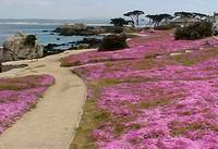 Pink Path in PG