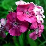 """""""Pretty in Pink II"""" by RCdeWinter"""