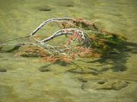 algae filled watter with branch