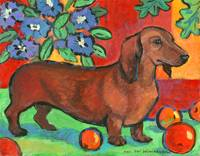 Colorful Dachshund