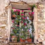 """Window  Provence"" by jerrymason"