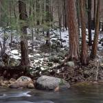 """Merced River"" by mikenorton"
