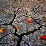 """Dry Autumn"" by mikenorton"