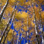 """""""Yellow Leaves Blue Sky"""" by mikenorton"""