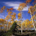 """Ashley Forest Aspens 1"" by mikenorton"