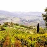 """""""Tuscany Vineyard"""" by eyespeakimages"""