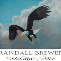 Eagle Art Prints & Posters by Randall Brewer