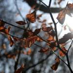 """Last leaves of Winter"" by RosieHillman"