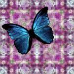 """Iris Dreams"" by windsweptacre"