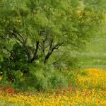 """""""Spring Pops"""" by PixRGB"""