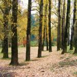 """""""Autumn Leaves"""" by SarahMcD"""