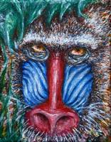 faces of africa:  Mandrill