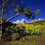 """Maroon Bells and an Aspen Branch"" by mikenorton"