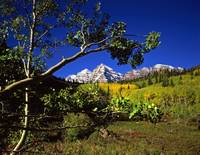 Maroon Bells and an Aspen Branch