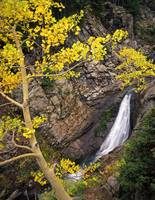 Yellow Forest Waterfall