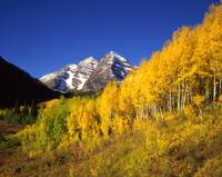 Maroon Bells and Small Aspens