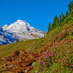 """""""Mt Baker Path with Wild Flowers"""" by robgerman"""