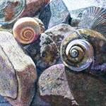 """Spiral Shells"" by LittletonStudioPrints"