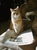 New York Times Reader