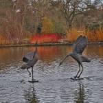 """Crane Statues (Wisley)"" by catherineflowermonkey"