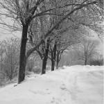 """Winter Tree"" by EprobertOU"
