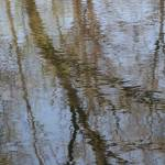 """""""tree reflection"""" by Lisa1111"""