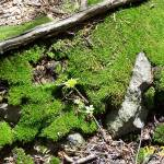 """""""Velvet Moss"""" by kghornsten"""