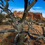 """Arches Funky Ole Tree"" by robgerman"