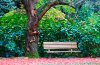 Bench and Tree