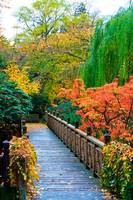 Foot Bridge in Autumn