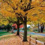 """Fall Leaves"" by robgerman"