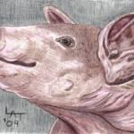 """""""This Little Piggy"""" by twincedar"""