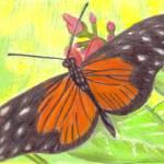 """""""Butterfly"""" by twincedar"""