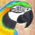 """""""Parrot"""" by twincedar"""