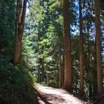 """Mt Rainier Path to Tolmie Peak"" by robgerman"