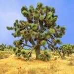 """Joshua Tree"" by coomBEZ"