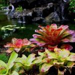 """Oahu Foliage 40"" by coomBEZ"