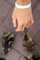 Baby Ducklings Kissing a Womans Ring
