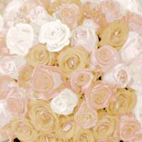 Tommy Pave Roses pale buff
