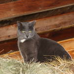 """Cat on a haypile"" by jow"