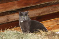 Cat on a haypile